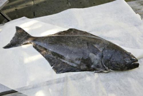 Cá bơn - Những loại cá giàu Omega 3 nhất có thể giúp giảm nguy cơ ung thư vú