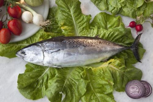 Cá ngừ - Những loại cá giàu Omega 3 nhất có thể giúp giảm nguy cơ ung thư vú