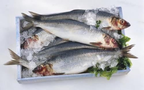 Cá trích - Những loại cá giàu Omega 3 nhất có thể giúp giảm nguy cơ ung thư vú